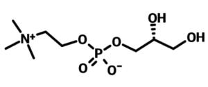 α-GPC 記号画像