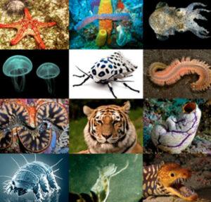 動物原料画像